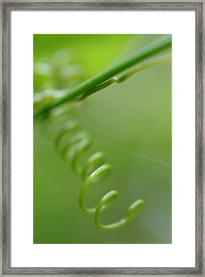 Green Spiral Macro Framed Print by Jenny Rainbow