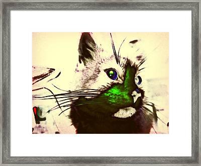 Green Spot Kitty Framed Print by Eddie G