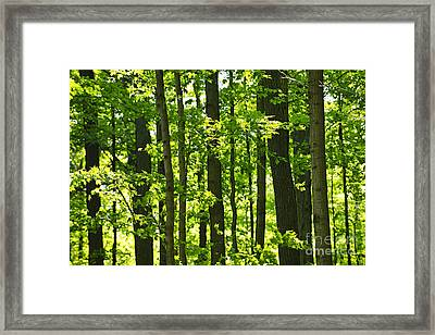 Green Spring Forest Framed Print
