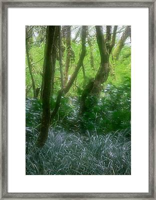 Green Study Framed Print by Kim Lessel