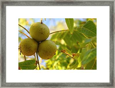 Framed Print featuring the photograph Green Summer by Alicia Knust