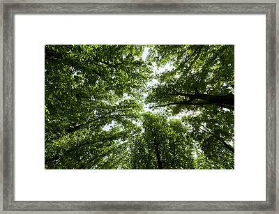 Green Summer Trees Framed Print by Ioan Panaite