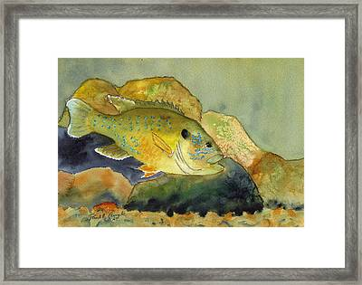 Green Sunfish Framed Print by Paul Temple