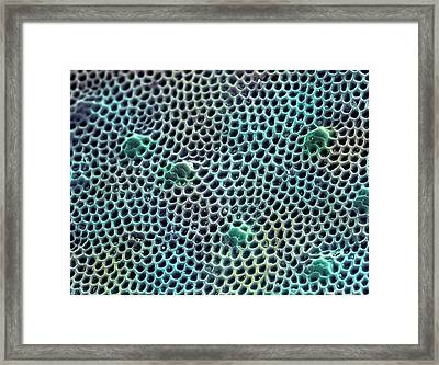 Green Tiger Beetle Carapace Framed Print