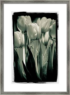 Framed Print featuring the photograph Green Toned Tulip by Craig Perry-Ollila