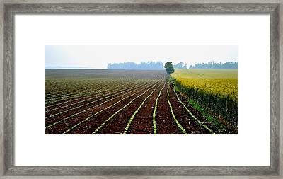 Green Track Meander Framed Print