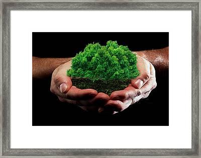 Green Tree Framed Print