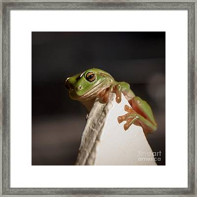 Green Tree Frog Keeping An Eye On You Framed Print by Peta Thames