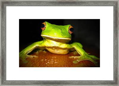 Green Tree Frog Framed Print by Laura Hiesinger