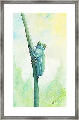 Green Tree Frog Framed Print by Wayne Hardee