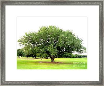 Framed Print featuring the photograph Green Tree by Oksana Semenchenko