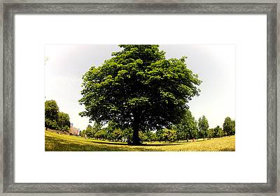Green Tree Framed Print by Stephen Richards