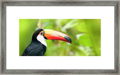 Green Tropical Rainforest With Toco Framed Print by Grafissimo