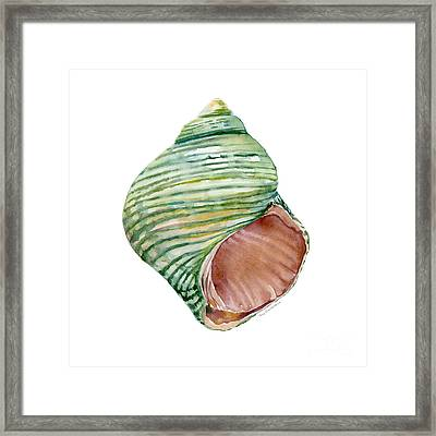 Green Turbo Shell Framed Print by Amy Kirkpatrick