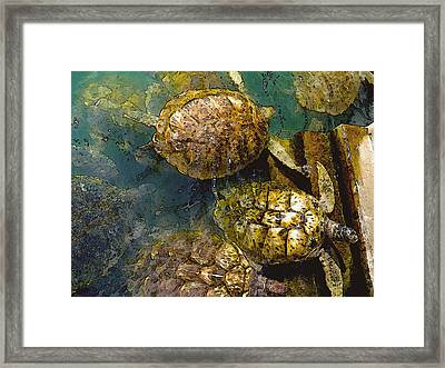 Green Turtles Framed Print by Carey Chen