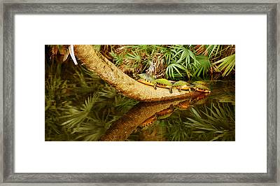 Green Turtles Chelonia Mydas On A Tree Framed Print by Panoramic Images
