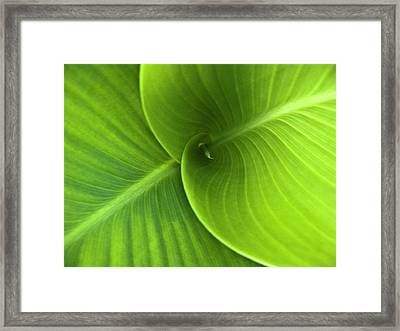 Green Twin Leaves Framed Print by Heiko Koehrer-Wagner