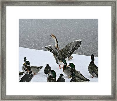 Green Valley Ducks Framed Print