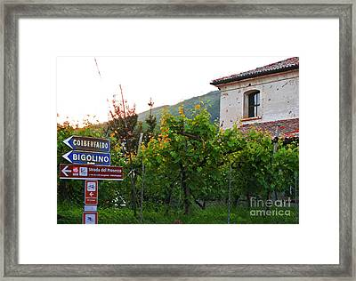 Green Vineyards Framed Print by Sarah Christian