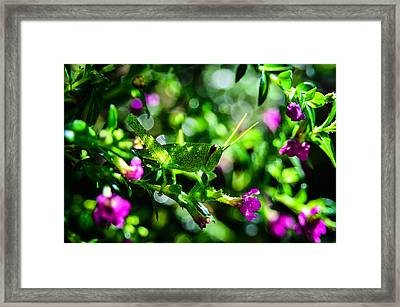 Green Visitor In The False Heather Framed Print by Brian Xavier