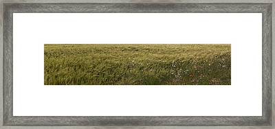 Green Wheat Vision Framed Print by Gina Dsgn