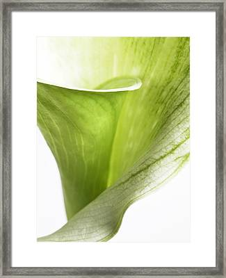Abstract White Green Flowers Art Work Macro Photography Framed Print by Artecco Fine Art Photography