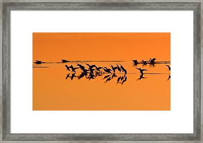 Green-winged Teal Ducks At Sunset Framed Print by Bob Gibbons