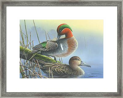 Green-winged Teal Ducks Framed Print