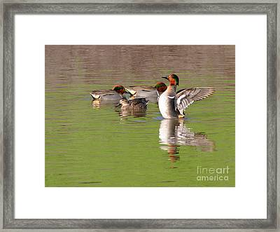Framed Print featuring the photograph Green-winged Teals by Bob and Jan Shriner