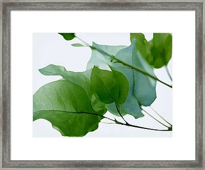 Green With Envy Bougainvillea Framed Print by Fraida Gutovich