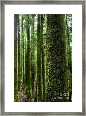 Green Wood Framed Print