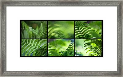 Green World. Polyptich For Interiors Framed Print by Jenny Rainbow