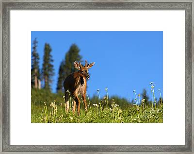 Greener Fields Framed Print by Mike Dawson