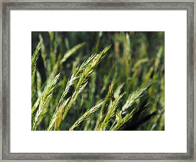 Greener Grass Framed Print by Justin Woodhouse