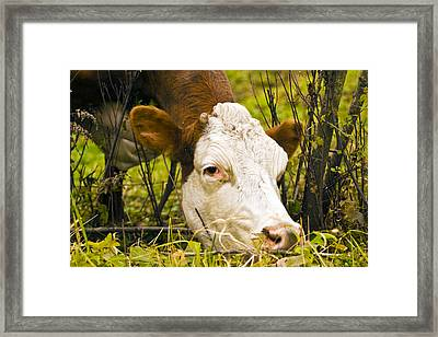 Greener On The Other Side Of The Fence Framed Print by David Simons