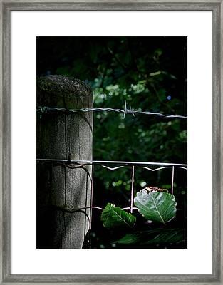 Greener There Framed Print by Odd Jeppesen