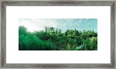 Greenery Along Fort Tilden Beach, Fort Framed Print