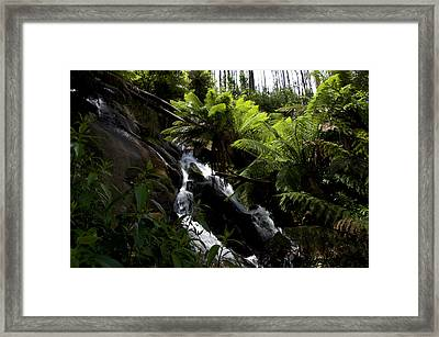 Greenery At Phantom Falls Framed Print by Graham Palmer