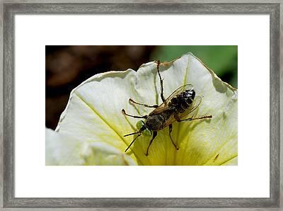 #greeneyes Framed Print by Becky Furgason