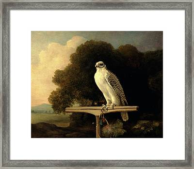 Greenland Falcon Gyr Falcon Signed And Dated Framed Print