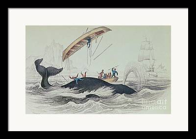 Sea Monsters Framed Prints