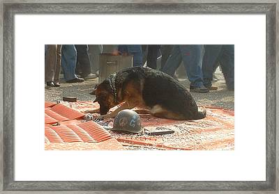 Greenpeace Dog Framed Print by Marc Philippe Joly