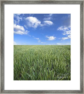 Greens And Sky Framed Print by Boon Mee