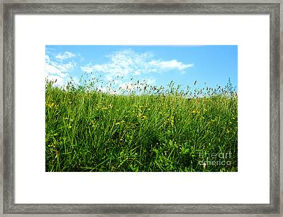 Greens Framed Print by Boon Mee