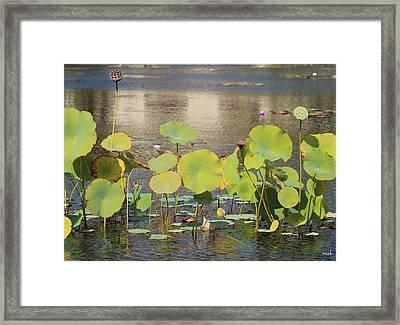Greens On A Pond 3 Framed Print by Mark Steven Burhart