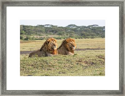 Greeting A New Day Framed Print by Christa Niederer