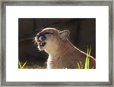 Greeting The Morning Light  Framed Print