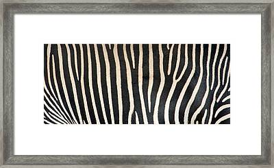 Greveys Zebra Stripes Framed Print