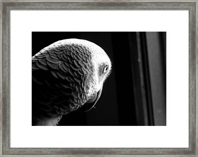 Grey 1 Framed Print by Paulina Szajek