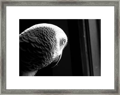 Grey 1 Framed Print by Paulina Szajek
